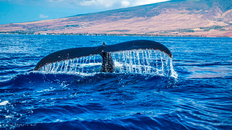 Whale Season in Los Cabos