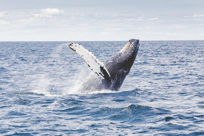 Whale Photo by Thomas Kelley on Unsplash