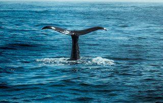 Whale Season in Nobu Hotel Los Cabos