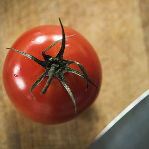 Sowing Your Tomato Seeds