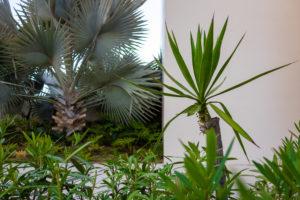 Palm Tree Nobu Los Cabos